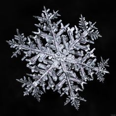 """Here's a special one. """"Stellar Dendrite"""" snowflakes are the ones we most admire…"""