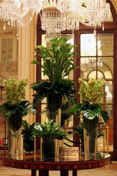 The Plaza Hotel's weekly arrangement is composed with gorgeous green calla lillies and orchids. #theplazahotel