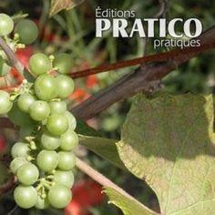 Comment tailler les vignes à raisin - Trucs et conseils - Jardinage et extérieur - Pratico Pratique