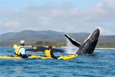 Kayaking WITH WHALES, OH YES, BUCKET LIST ADDITION!!