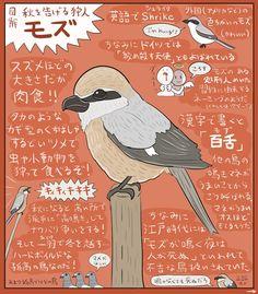 伊東 美紀 retweeted: そろそろ秋も本気出してきそうなので秋のハンターモズの図解を描きました近所でも高鳴きを聞けたりはやにえを目撃できたりモズ好きには嬉しい季節がやってきますねはやにえって何だろうと好奇心を抱いた人は画像検索する前にこの図解で予習しといた方がいいかもしれません Japanese Animals, Book Wall, Animal Facts, Manga, Wildlife, Logo Design, Creatures, Birds, Drawings