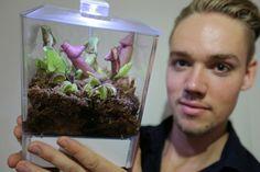 Natuurlijke manier muggen, vliegen, spinnen en fruitvliegjes vangen met de swampworld vleesetende planten - Mamaliefde.nl