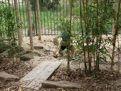"Plant bamboo around the sandpit to create a ""Jungle sandpit"" will bamboo grow here....hmmm, need to find something similar"