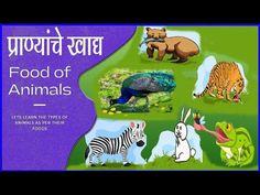 प्राण्यांचे खाद्य Foods of animals in Marathi | Classfication of Animals...