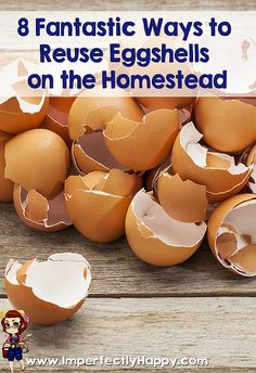 8 Fantastic Ways to Reuse Eggshells on the Homestead! | ImperfectlyHappy.com