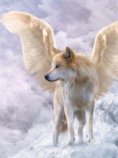 Angel Wolf