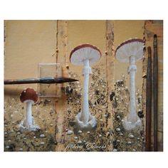 """""""METAMORPHOSES"""" : le champignon, illustration en cours de création (prochainement aux Ed. Le Seuil Jeunesse """"Beaux Livres"""" ... """"METAMORPHOSIS"""" painting in progress by frederic Clement ( soon published in Ed. Le Seuil )"""