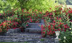Garden retreat, garden bench with roses, English Roses, Rose Tess of The d'Urbervilles, David Austin Roses, shrub roses, fragrant roses, Favorite roses