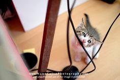 Haha - naughty cat!