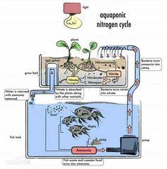 Aquário e aquaponia