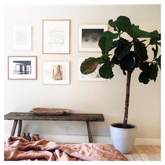 Trädvakt @sofia_wood Entryway Bench, Wood, Instagram Posts, Furniture, Home Decor, Inspirational, Interiors, Entry Bench, Hall Bench