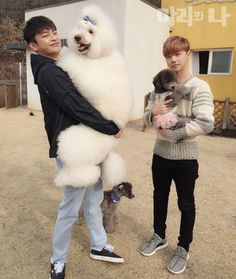 That poodle is legitimately the same size as Jinhwan. srsly y u so cute and smol? Asian Actors, Korean Actors, Drama, Poodle, Bobby, Kim Jinhwan, Musica Pop, Nct Taeil, Seo In Guk