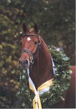 """Miss working with this boy! """"Liberty Gold"""""""