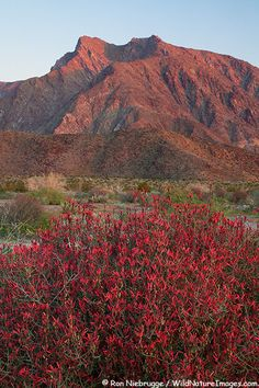 Indian Heal Mountain, Anza-Borrego Desert State Park, California; photo by Ron Niebrugge