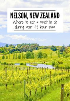 Don't miss a visit to Nelson during your New Zealand visit! This charming town has easy access to wineries, beaches and the stunning Abel Tasman National Park. Check out these tips for 48 hours in Nelson, NZ. Travel Tips. New Zealand Itinerary, New Zealand Travel Guide, Travel Guides, Travel Tips, Travel Destinations, Budget Travel, Nelson New Zealand, Abel Tasman National Park, New Zealand Adventure