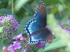 Butterflies pictures image by cherith_girl on Photobucket
