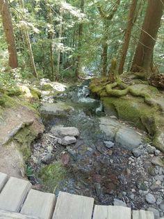 Silver falls trail, Ohanepekosh Creek.  Mount Rainier National Park Washington