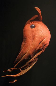 Vampyroteuthis Infernalis- the vampire squid. Not actually vampiric, but it can turn itself inside out, which is pretty cool.