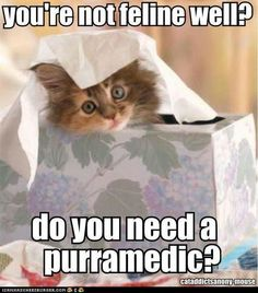 Not feline well?