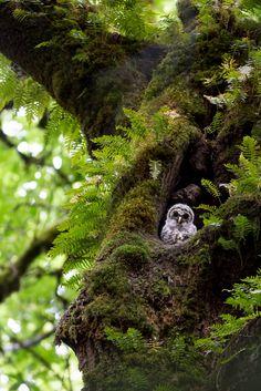Voice of Nature: Photo All Nature, Amazing Nature, Beautiful Birds, Beautiful World, Photo Animaliere, Enchanted Wood, Nature Animals, Belle Photo, Nature Photos