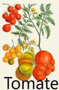 Tomate: Discordia.
