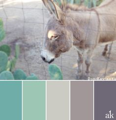 A donkey-inspired color palette