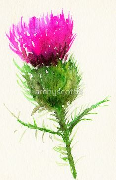 Thistle by archyscottie