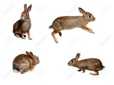 7732488-Wild-rabbits-collage-on-pure-white-background-Stock-Photo-jumping-bunny.jpg 1.300×974 Pixel