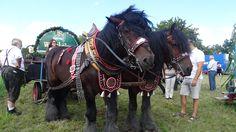Pferdetag, Pferdefreunde Knoblauchland 21.08.16