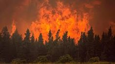 Image result for wild fire pictures