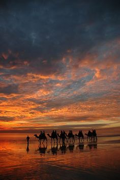 Sunset - Camels on Cable Beach, Western Australia