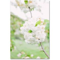 Trademark Fine Art 'White Cherry Blossoms 4' Canvas Art by Ariane Moshayedi, Size: 16 x 24, Multicolor