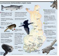 Luonto. Helsingin Sanomat.
