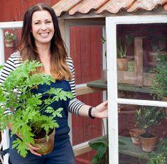 Bygga miniväxthus av gamla fönster – steg för steg Garden Crafts, Garden Art, Diy Greenhouse, Garden Planning, Diy Projects, Flowers, Plants, Women, Gardening