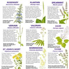 A handy guide to the magical properties of some common herbs.