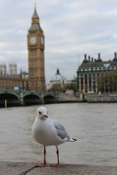 Great shot of London and of course the seagull