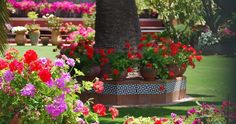 Jardin estilo andaluz