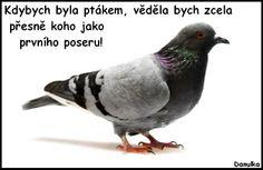 danulka.blob.cz