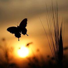 Der schwarze Schmetterling verglüt in der Erfüllung seiner Sehnsucht, ein Feuermeer am Horizont