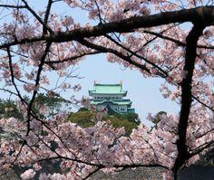 Nagoya castle with blossom - Nagoya, Aichi. Gorgeous.