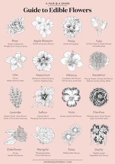 Our Guide to Edible Flowers Turns out edible flowers are both a science and an art. Read on for a distillation of what we learnt. Read on for our guide to edible flowers! Edible Plants, Edible Garden, Garden Plants, House Plants, Shade Garden, Garden Beds, Vegetable Garden, Paludarium, Flower Food