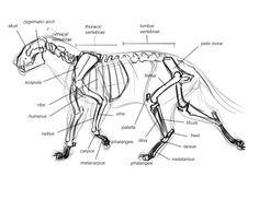 220 Best Animal Skeletons images in 2018 | Animal skeletons