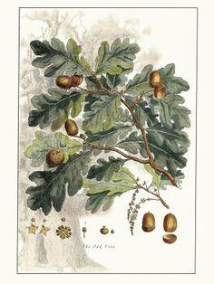 Free Vintage Oak with Acorns printable