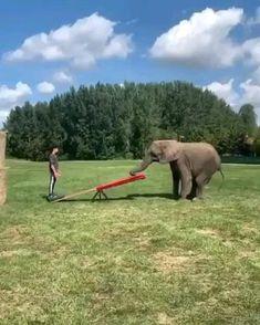 Funny Elephant Videos, Elephant Gif, Funny Animal Videos, Animal Memes, Super Cute Animals, Cute Funny Animals, Funny Cute, Funny Photos, Best Funny Pictures