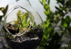 Terrarios #Terrarium #Plants #Succulent #Beautiful #Nature #Orchid Terrarium Plants, Orchids, Succulents, Nature, Beautiful, Terrariums, Natural Medicine, Herbs, Plants