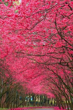 can you just imagine walking under this canopy with a lover?!?!? The colour of love & relationship in Feng Shui...