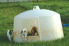 goat house- #babygoatfarm