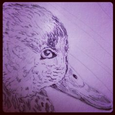 ✏ #dibujo de un #pato #Карандашный #рисунок из #утки . A #pencil #drawing of a #duck - @pacotorresill- #webstagram