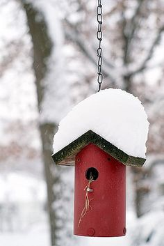 Red Bird House - Winter - Snow