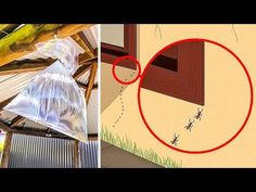 10 Ways to Get Rid of Insects and Bugs in Your Home - YouTube